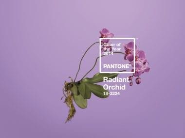 cover2 380x285 - Rok 2014 sa vyfarbil – PANTONE vybralo novú Color of The Year!