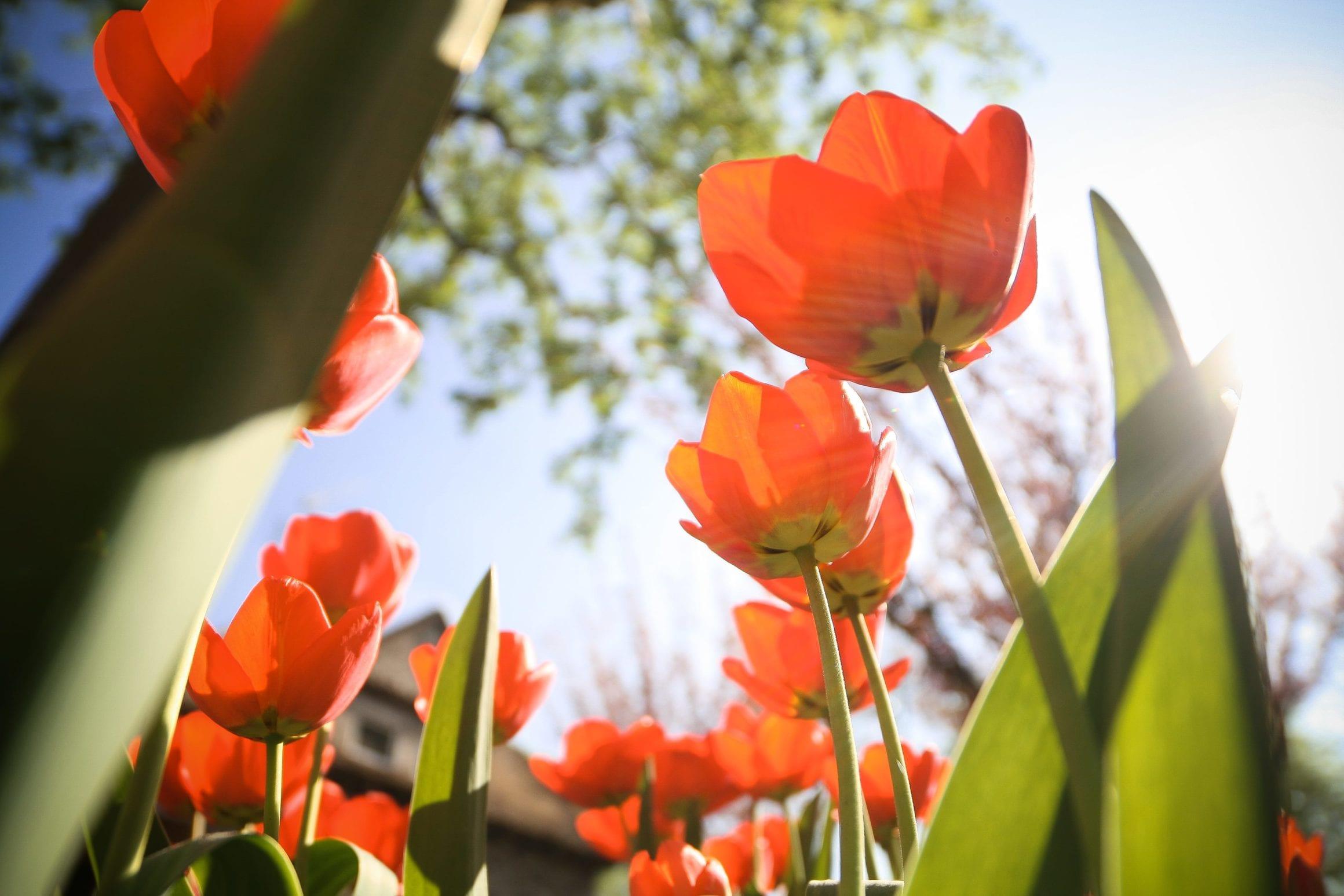 picjumbo.com IMG 8697 - picjumbo – free fotky pre vašu prácu