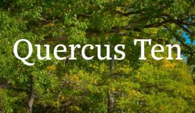 7e40e340cbada518314037ecdc9d5641 380x220 - Font dňa – Quercus 10 (zľava 30%, od 39,89€)