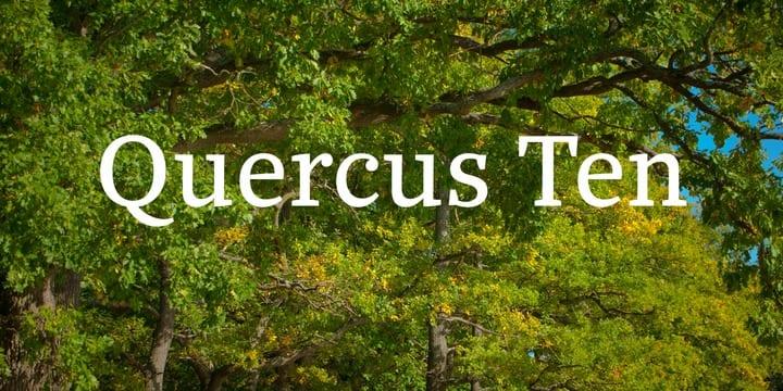 7e40e340cbada518314037ecdc9d5641 - Font dňa – Quercus 10 (zľava 30%, od 39,89€)