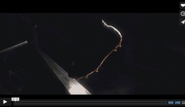 snimka obrazovky 2015 06 18 o 9.10.59 380x220 - Pohyblivá inšpirácia – Nike ~ Hypervenom II