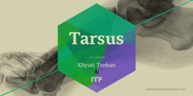 182759 380x190 - Font dňa – Tarsus