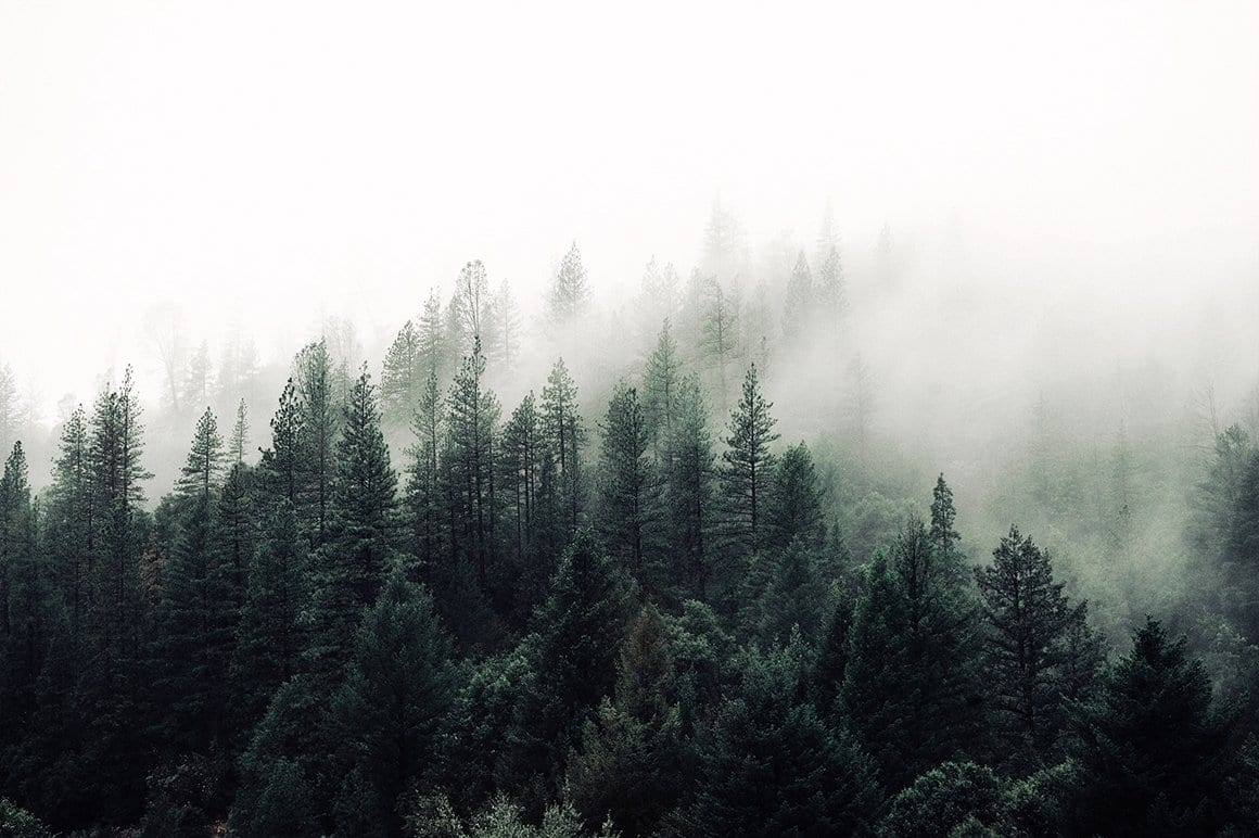 cm fog forest - Modern Moody Photoshop Action za 50 dolárov
