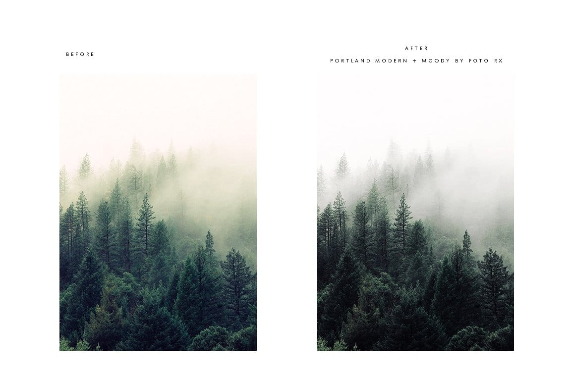 pdx before and after foggy forest cm - Modern Moody Photoshop Action za 50 dolárov