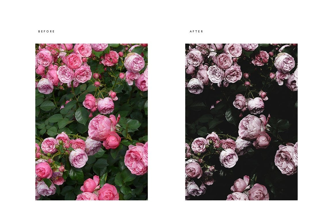 pdx before and after roses cm - Modern Moody Photoshop Action za 50 dolárov