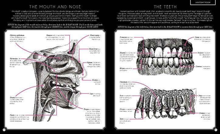 Carnovsky Illumanatomy book Wide Eyed editions publication itsnicethat 6 - Carnovsky ilustruje lidské tělo pod rentgenovým paprskem pomocí techniky RGB ilustrace