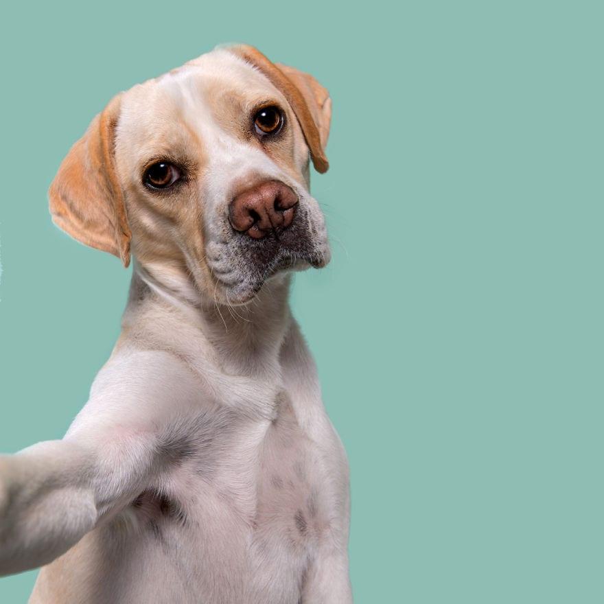 20160429 PityfulClooney 5ab95d4871c2a  880 - Pes najlepší priateľ človeka – fotky, ktoré dokazujú, že je každý z nich výnimočný
