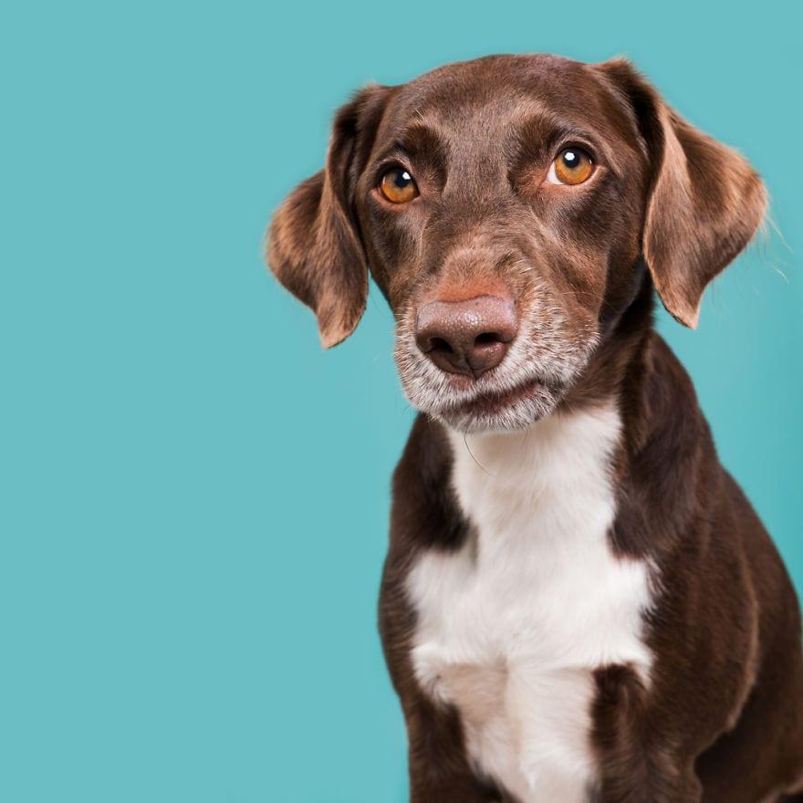 20170719 SniffyKarlo 5ab95d67954cb  880 - Pes najlepší priateľ človeka – fotky, ktoré dokazujú, že je každý z nich výnimočný