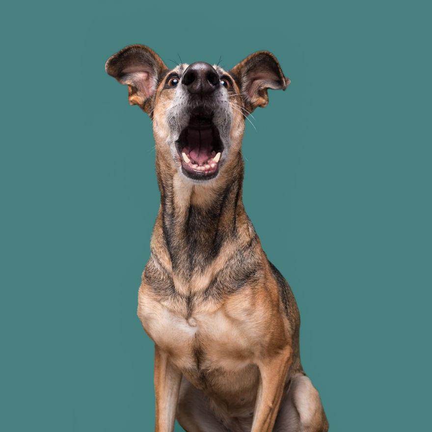 20171018 ShockedNoodles 5ab95d7a82bdc  880 - Pes najlepší priateľ človeka – fotky, ktoré dokazujú, že je každý z nich výnimočný