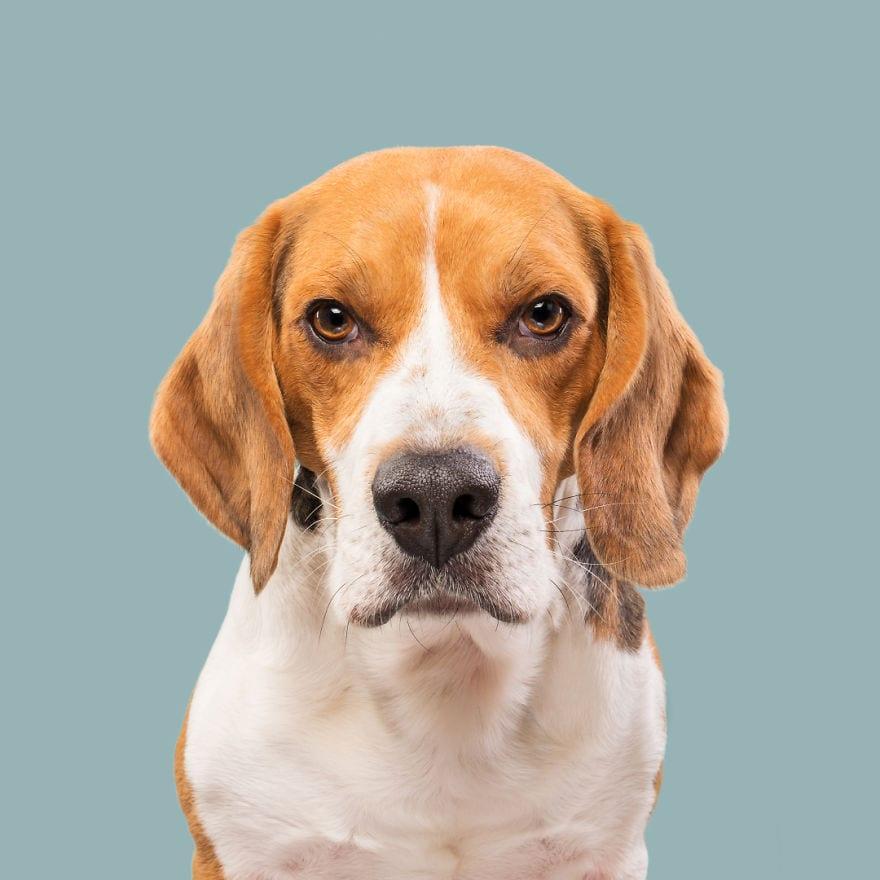 20171109 NotSoPleased Ernie 5ab95d84d9aaf  880 - Pes najlepší priateľ človeka – fotky, ktoré dokazujú, že je každý z nich výnimočný