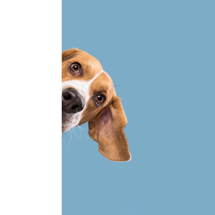 20171109 ShyErnie 5ab95d88ae311  880 - Pes najlepší priateľ človeka – fotky, ktoré dokazujú, že je každý z nich výnimočný