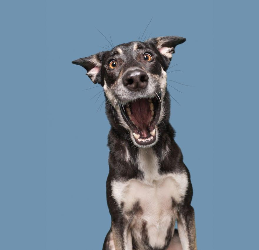 20171111 PanickingJette 5ab95d8c251e4  880 - Pes najlepší priateľ človeka – fotky, ktoré dokazujú, že je každý z nich výnimočný