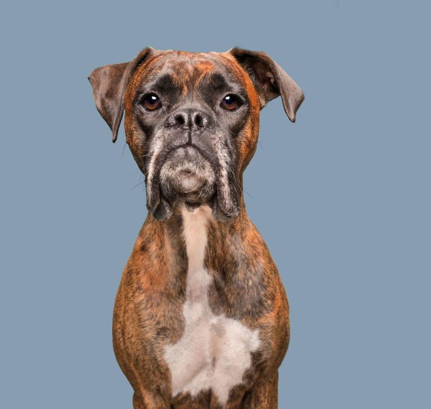 20171113 DisappointedCooper web 5ab95d91e5a4b  880 - Pes najlepší priateľ človeka – fotky, ktoré dokazujú, že je každý z nich výnimočný