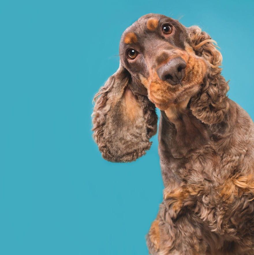 20171116 CuriousChico 5ab95d976ed40  880 - Pes najlepší priateľ človeka – fotky, ktoré dokazujú, že je každý z nich výnimočný