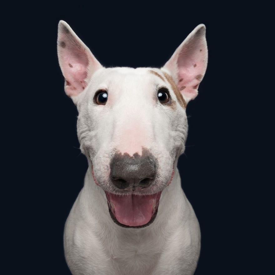 20180202 HappyMailo 5ab95da04c4db  880 - Pes najlepší priateľ človeka – fotky, ktoré dokazujú, že je každý z nich výnimočný
