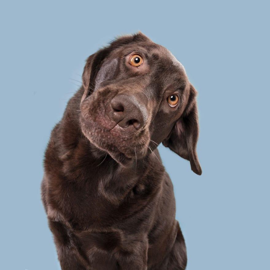 20180227 QuizzicalBodo 5ab95da9cab0a  880 - Pes najlepší priateľ človeka – fotky, ktoré dokazujú, že je každý z nich výnimočný