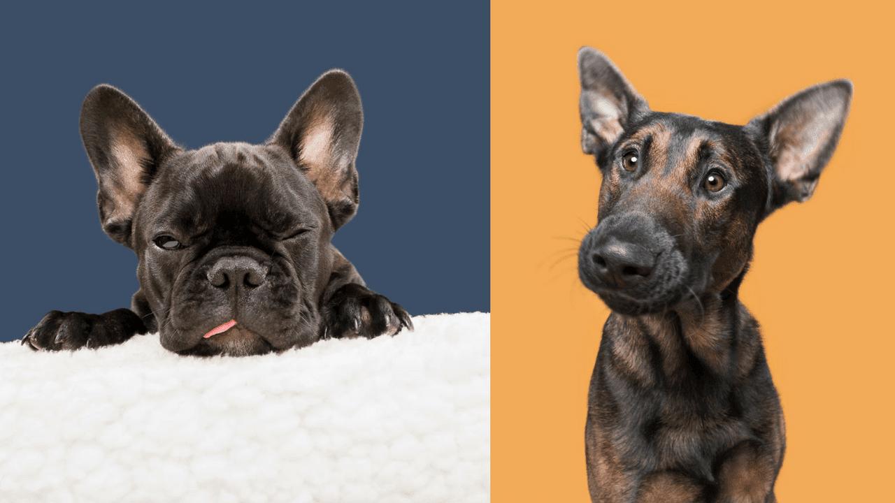 Dizajn bez názvu 3 - Pes najlepší priateľ človeka – fotky, ktoré dokazujú, že je každý z nich výnimočný