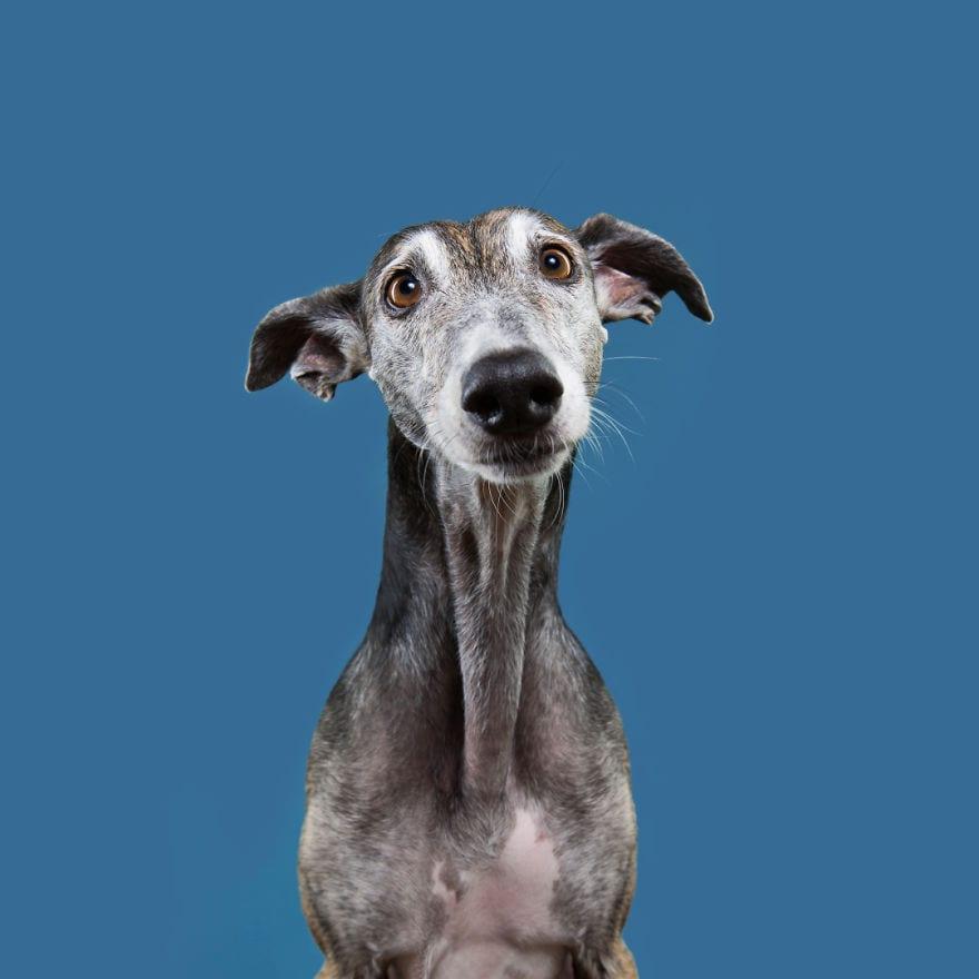 Trying to portrait that unique dogsonality 5ab96ae0486e1  880 - Pes najlepší priateľ človeka – fotky, ktoré dokazujú, že je každý z nich výnimočný