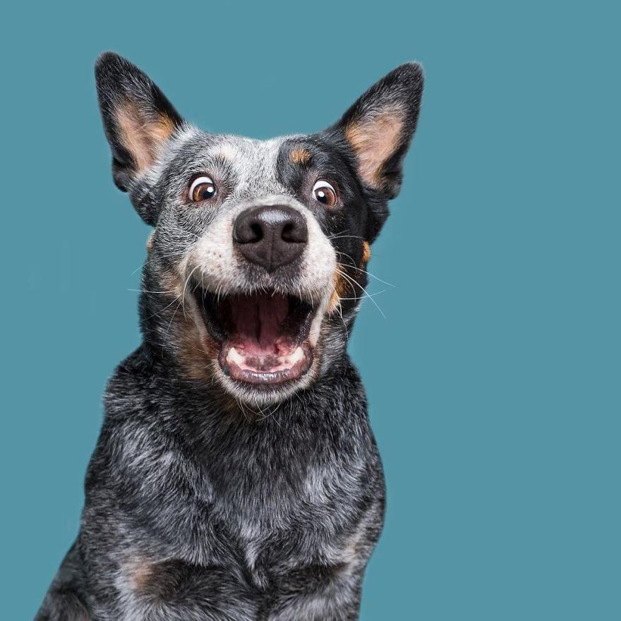 Trying to portrait that unique dogsonality 5ab9f69cab070  880 - Pes najlepší priateľ človeka – fotky, ktoré dokazujú, že je každý z nich výnimočný