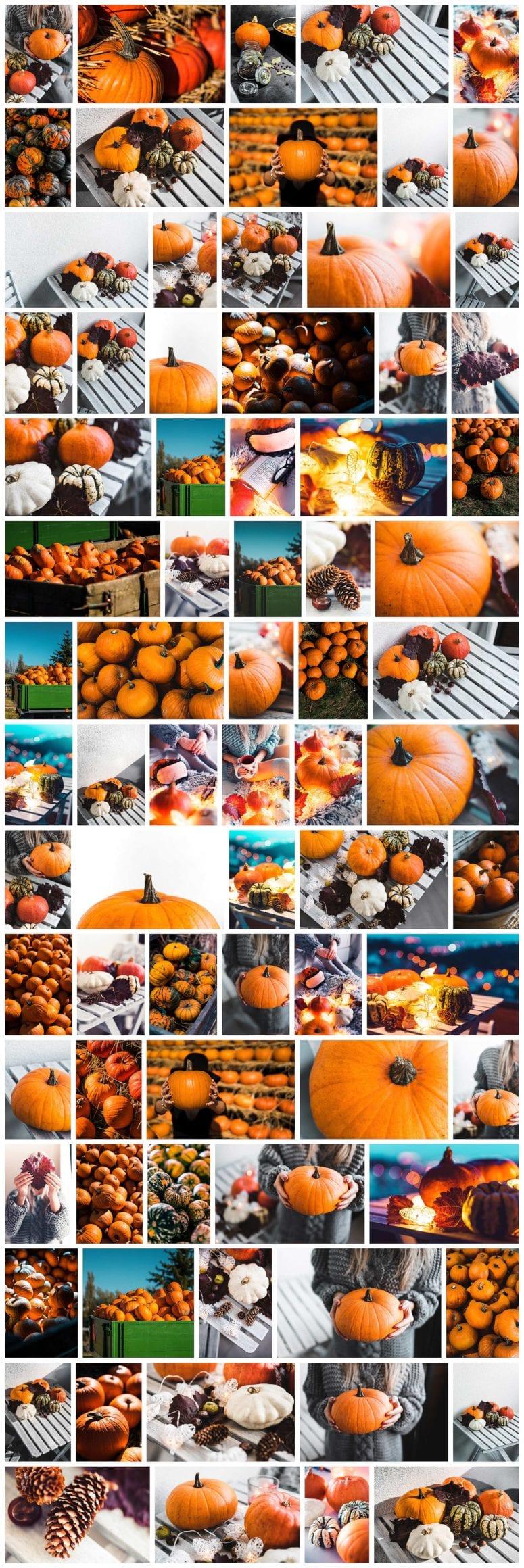 halloween mood - 77 Halloween stock fotografií: picjumbo vydává další fotokolekci