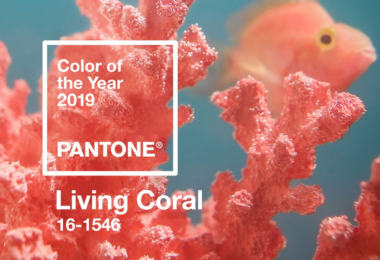 pantone color of the year 2019 living coral banner mobile - PANTONE – barvou roku 2019 je Living Coral