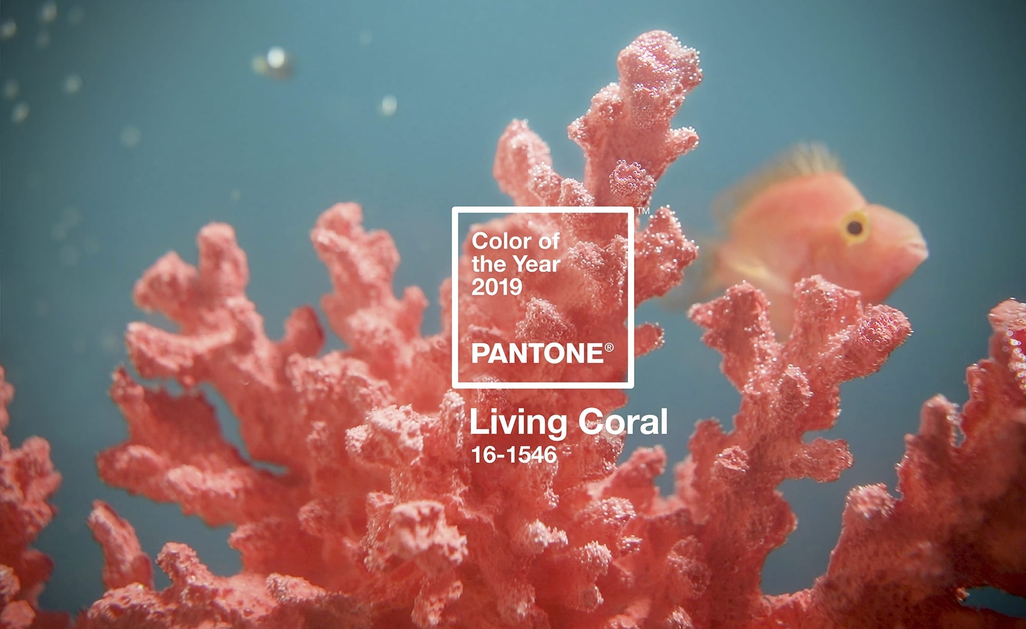 pantone color of the year 2019 living coral - PANTONE – barvou roku 2019 je Living Coral