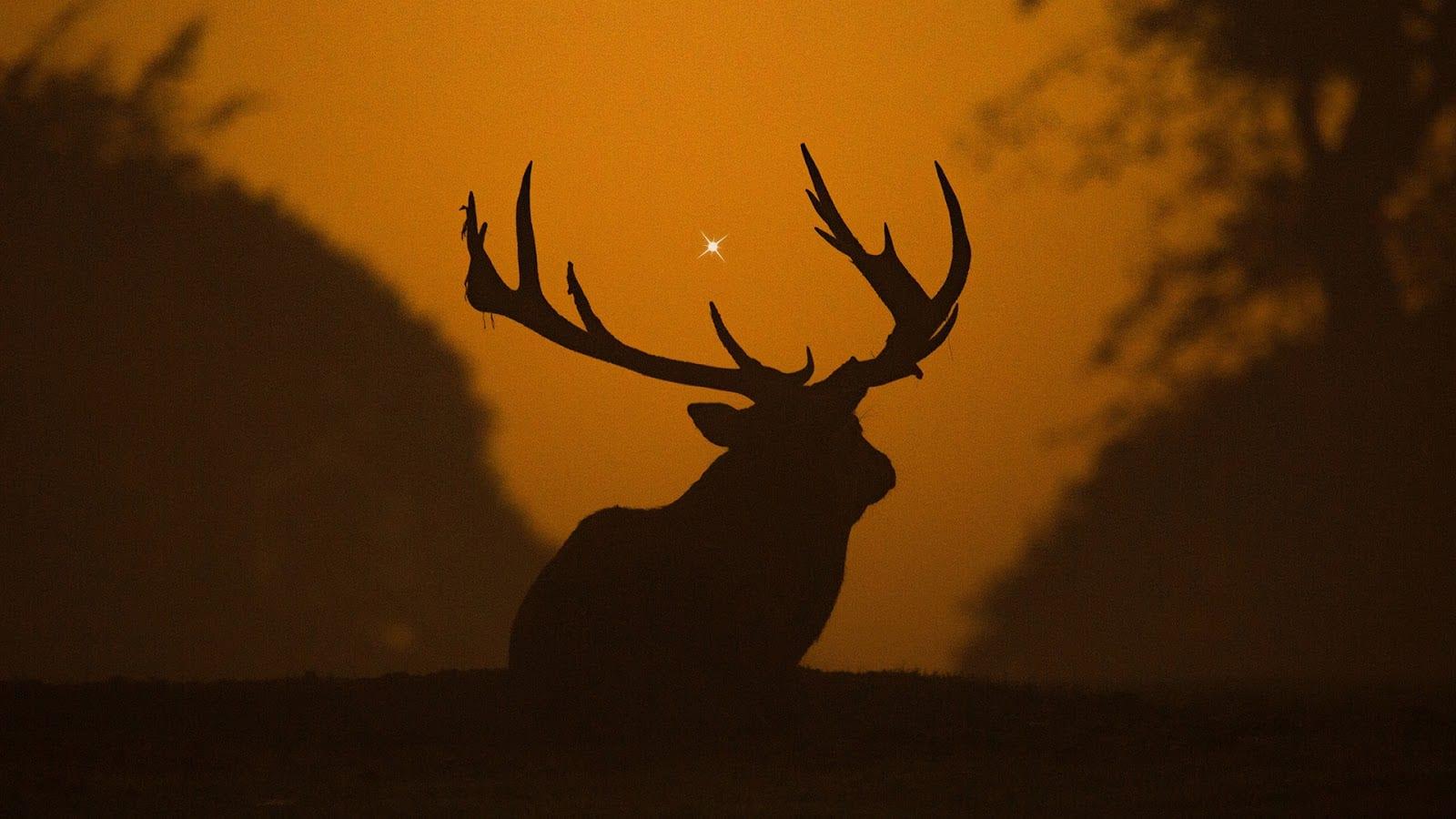 deer star 2 - Ach, tie obaly - Deer Star