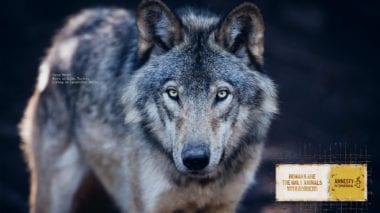 cov 5 380x213 - Animal Borders – kampaň Amnesty International stiera hranice